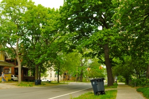 Urban tree canopy in Ann Arbor, MI