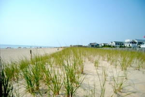 Seagrass strengthens the dunes to help protect the Delaware beach communities from storms.