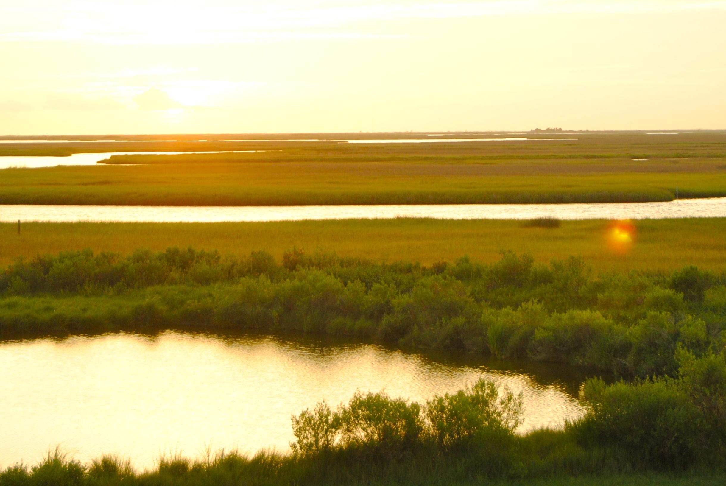 South Louisiana Wetlands Discovery Center |