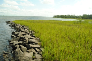 Oysters + rocks + marsh grass = living shoreline at Pine Knoll Shores in North Carolina