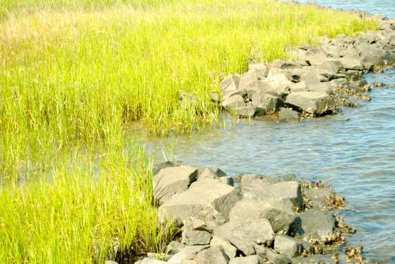Living shorelines protect the area from flood risk.