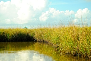 Wetlands in the Gulf of Mexico protect homes from storm sturges and store carbon.