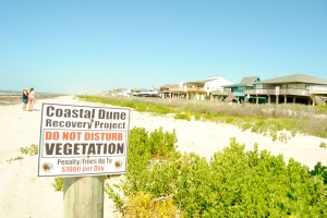 A dune habitat restoration project protects beachfront homes in Galveston, TX