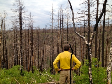 Bill Armstrong looks out over the Las Conchas fire scar.