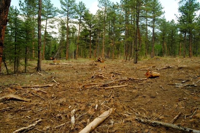 Ekarius said that Colorado's forests have 3-20 times the trees that existed before European arrival. This forest is managed to contain fewer trees per acre, making it adapted to fire.