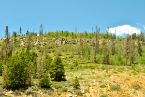 Some forest management near the Dillon Reservoir.