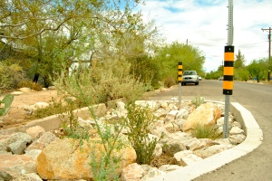 A curb cut on a Tucson, Arizona street diverts stormwater to support dessert bounty.