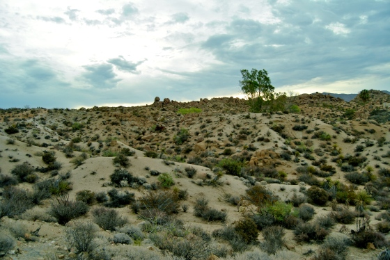 Our early morning hike revealed no Joshua trees in the Colorado Desert, near Cottonwood Spring
