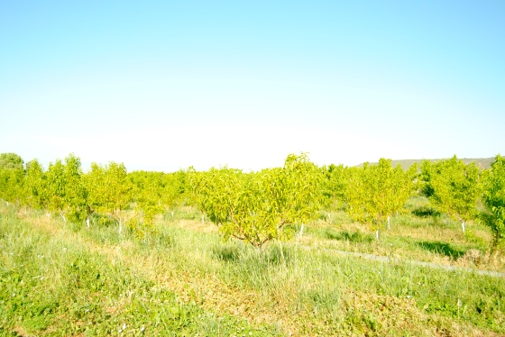 Orchards on Colorado's North Fork Valley