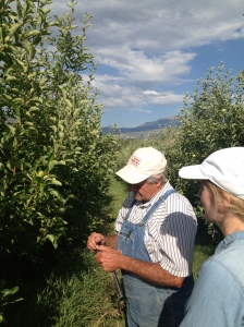 Glenn Austin shows road tripper Kirsten Howard how he grafts apple trees to create the perfect fruit