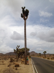 Kirsten Howard hugs the world's tallest Joshua tree which stands 40 feet tall.