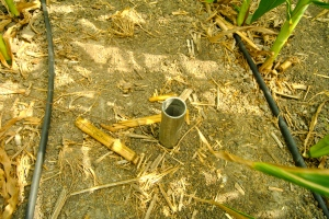 A monitoring device measures soil moisture in a corn field.