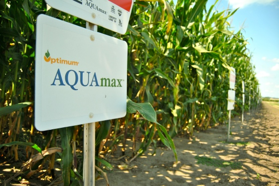 AQUAmax corn grown at the DuPont Pioneer Innovation Center in Johnston, Iowa.