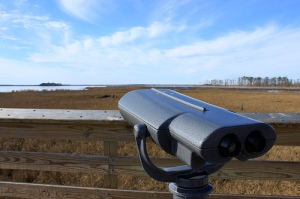 180,000 visitors come to Blackwater every year, many of them birdwatchers. Key species include the saltmarsh sparrow, the clapper rail, the American black duck, and the willet. The Refuge also supports 600 jobs and provides $6 million in local tax revenue. | Photo: (c) Whitney Flanagan, The Conservation Fund