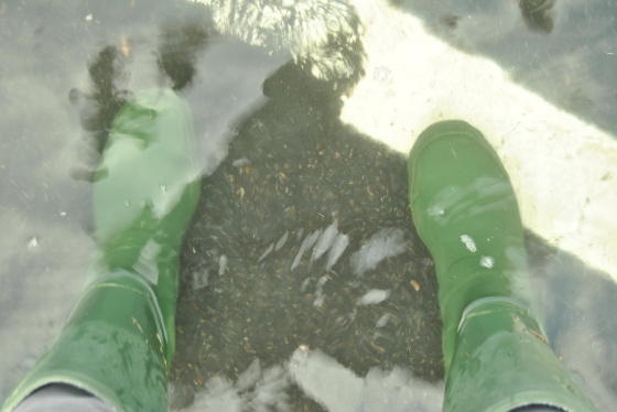 These boots are made for walking--or wading. The highest tides of the year already cause flooding in Portsmouth--will I need hip waders in 2050?