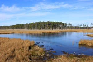 It wasn't always obvious that sea level rise was the major driver of Blackwater's marshes slowly converting to open water. | Photo: (c) Whitney Flanagan, The Conservation Fund