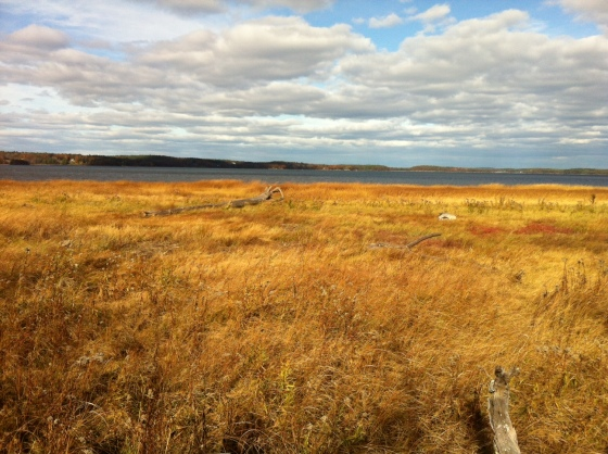 Salt marsh stretches out to Great Bay--a valuable part of the coastal New Hampshire ecosystem