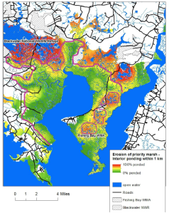 Blackwater's Adaptation Strategy identifies a few areas (inside the pink polygons) where marsh restoration may be worth it. Elsewhere, marsh migration is the most promising strategy.